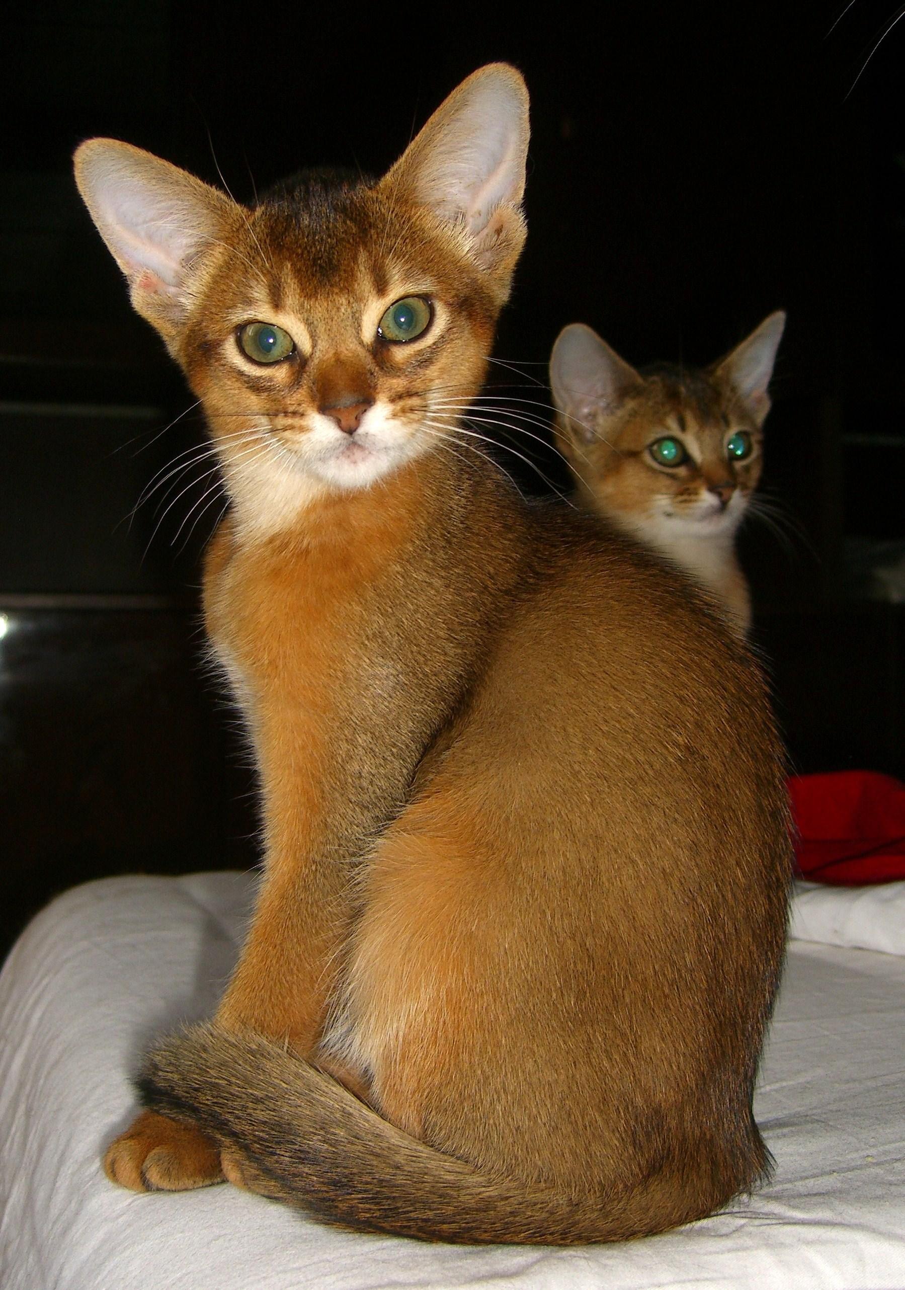 Самые ласковые породы кошек 11 пород с фотографиями и